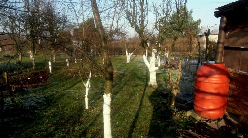 wybór miejsca pod drzewo owocowe