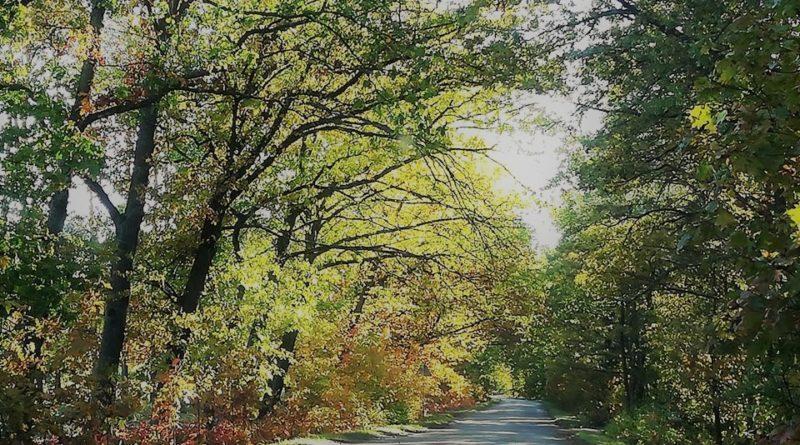 dlaczego liście zmieniają barwę