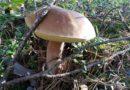 dlaczego warto zbierać grzyby