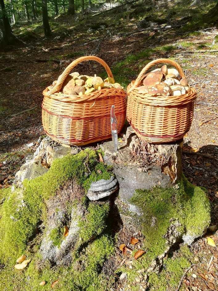 do czego zbierać grzyby