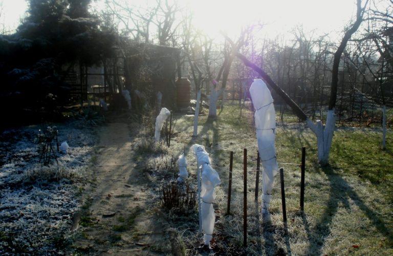 jak okrywać rośliny na zimę