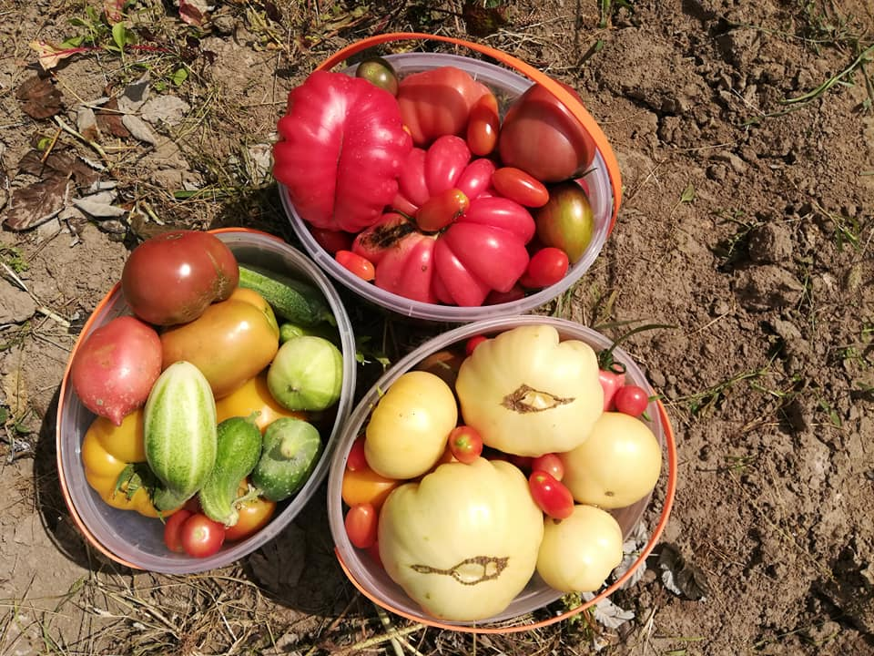 jakie nasiona wybrać