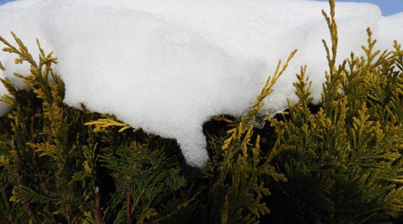 podlewanie roślin zimą