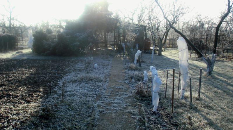 podlewanie roślin zimą jak