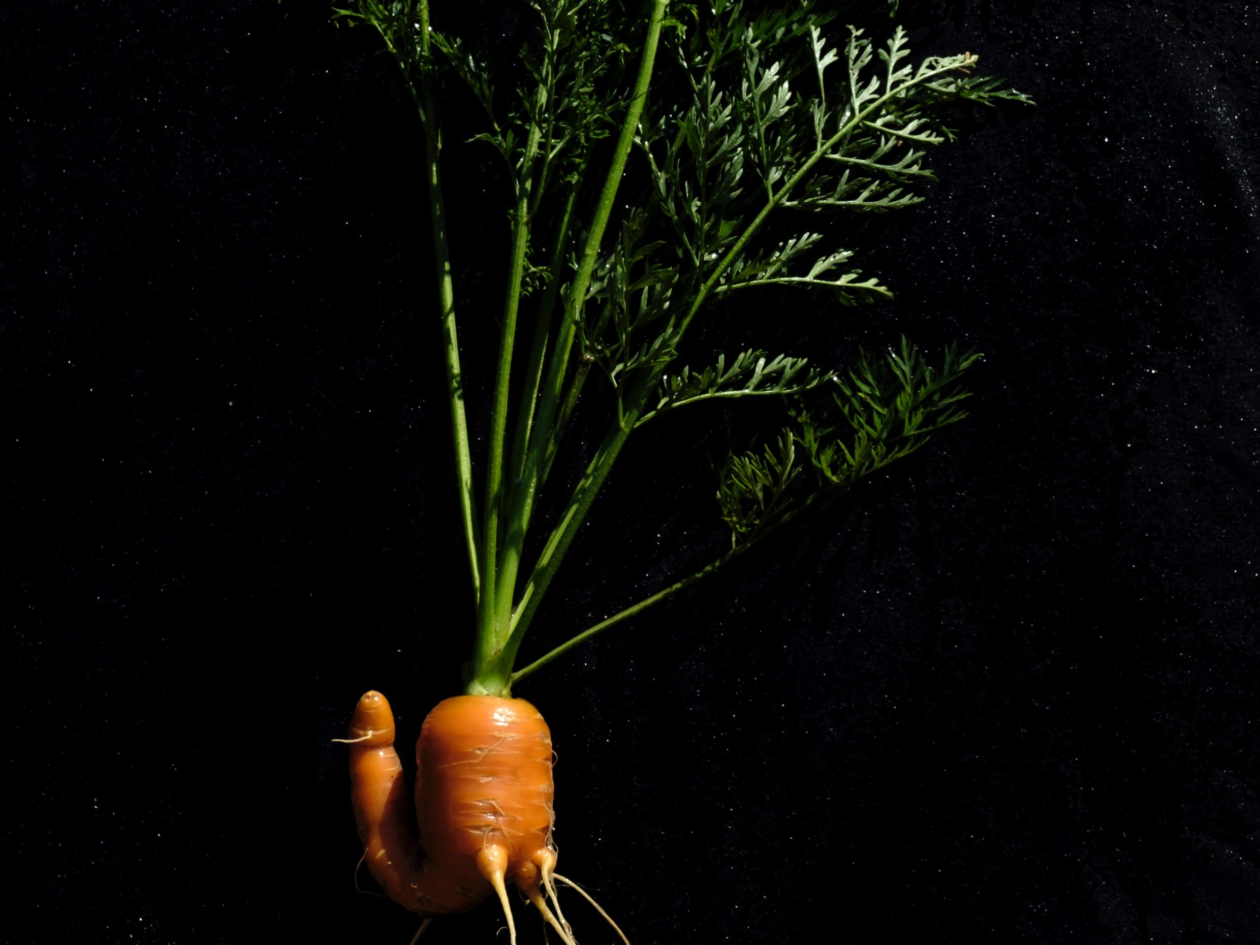rośliny, które odrastają - marchew, pietruszka, seler