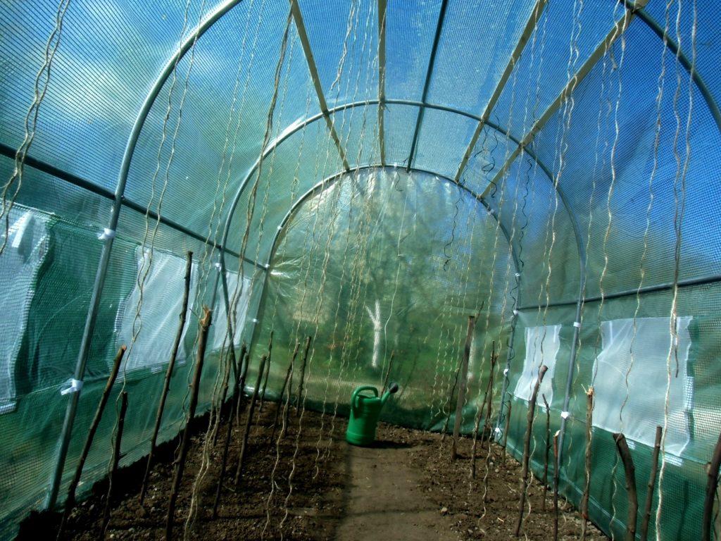 uprawa warzyw pod osłonami