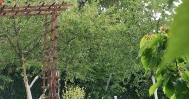 jak oszczędzać wodę w ogrodzie