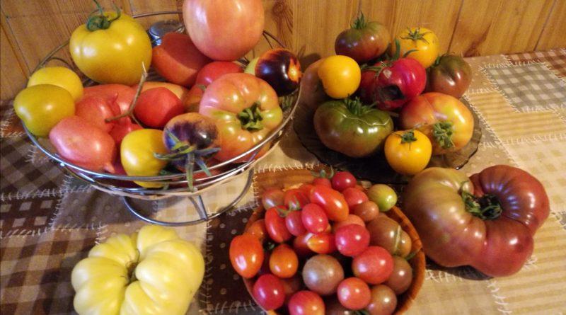 jak zwiększyć plony upraw szklarniowych