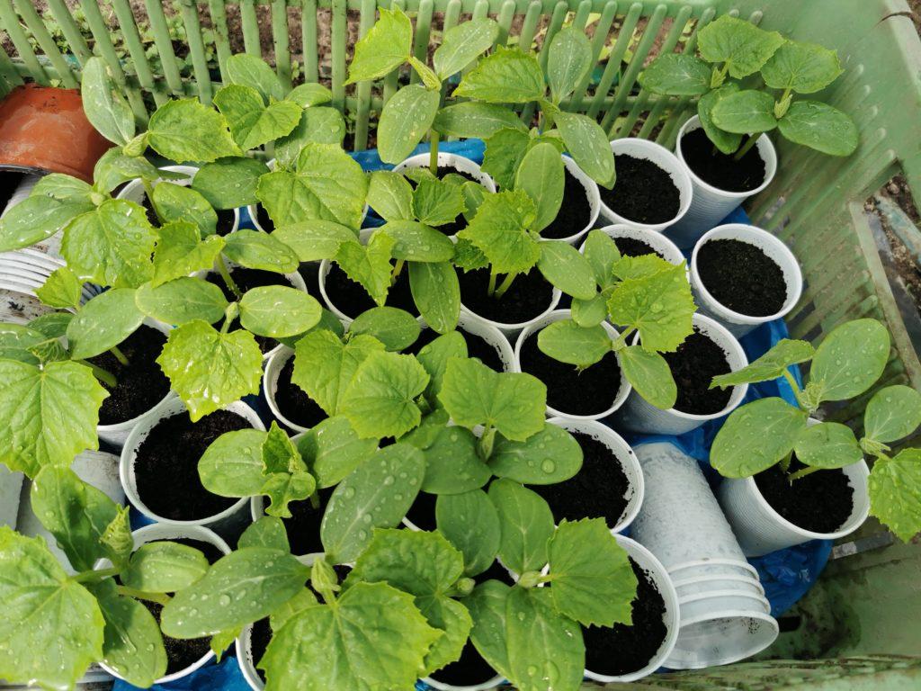 jak zwiększyć plony upraw szklarniowych w ogrodzie