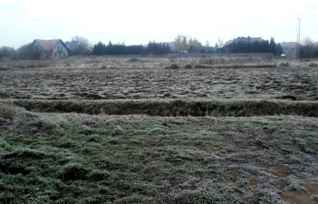 zimni ogrodnicy i zimna zośka