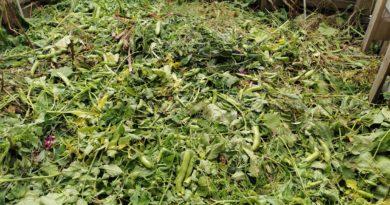 co wrzucać na kompost
