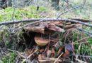 gdzie szukać grzybów