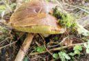 kiedy szukać grzybów