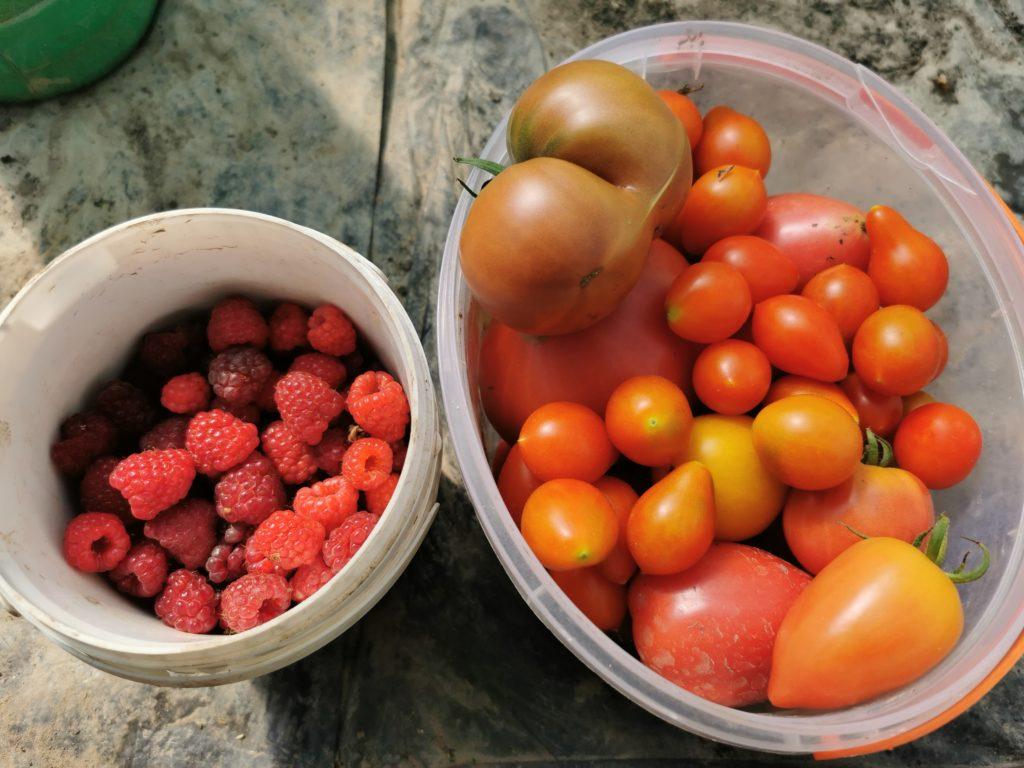 wrześniowy zbiór owoców i warzyw