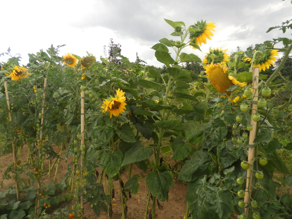 ekologia w ogródku