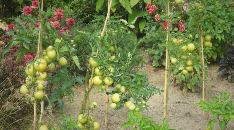 ekologia w ogrodzie