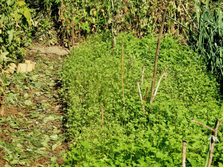 ekologia w ogrodzie działkowym