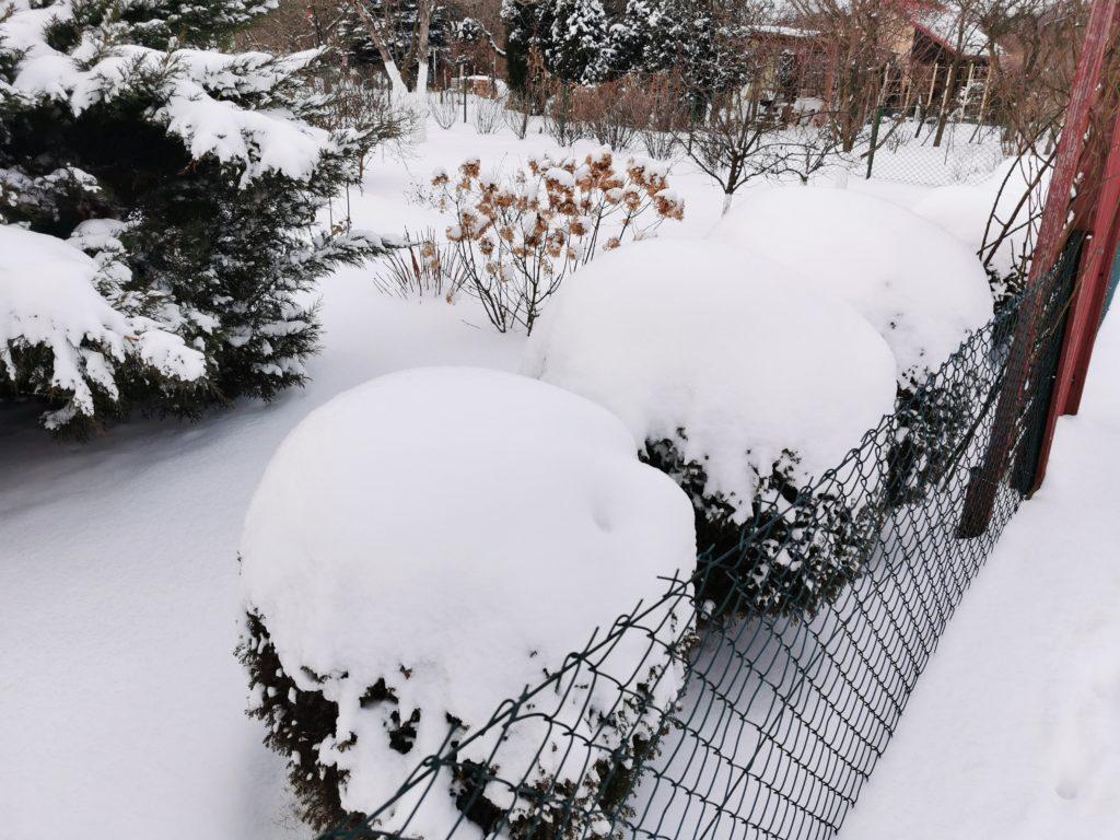 odwilż w ogródku