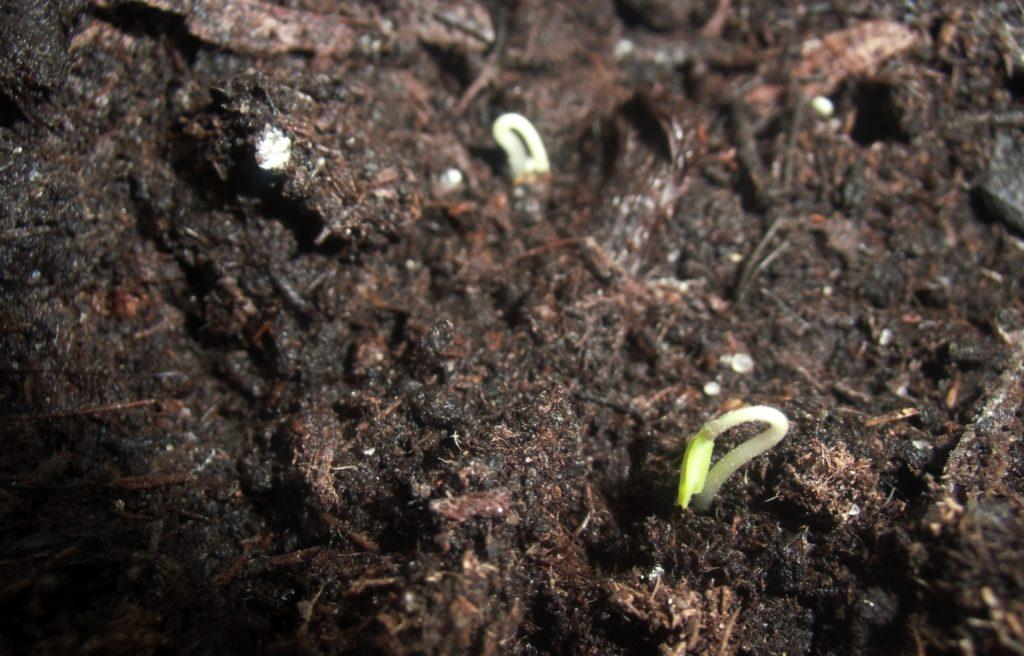 podłoże do wysiewu nasion