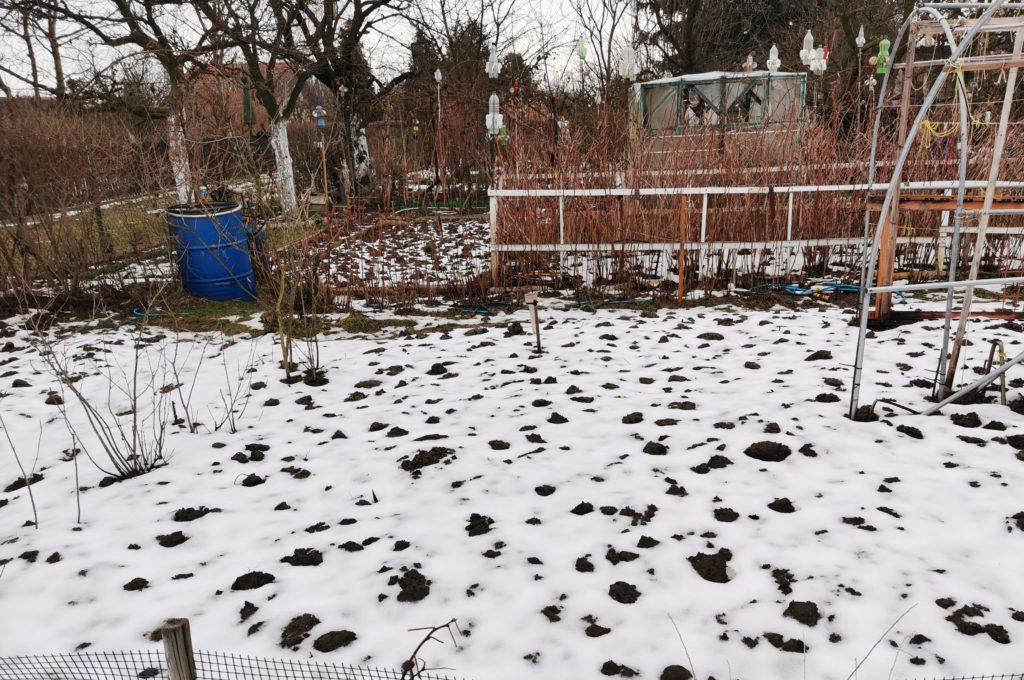 roztopy w ogrodzie