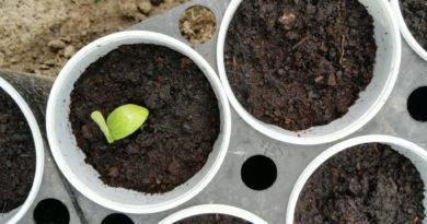 ziemia do wysiewu nasion