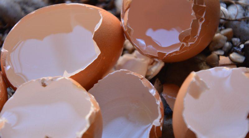skorupki jajek w ogrodzie